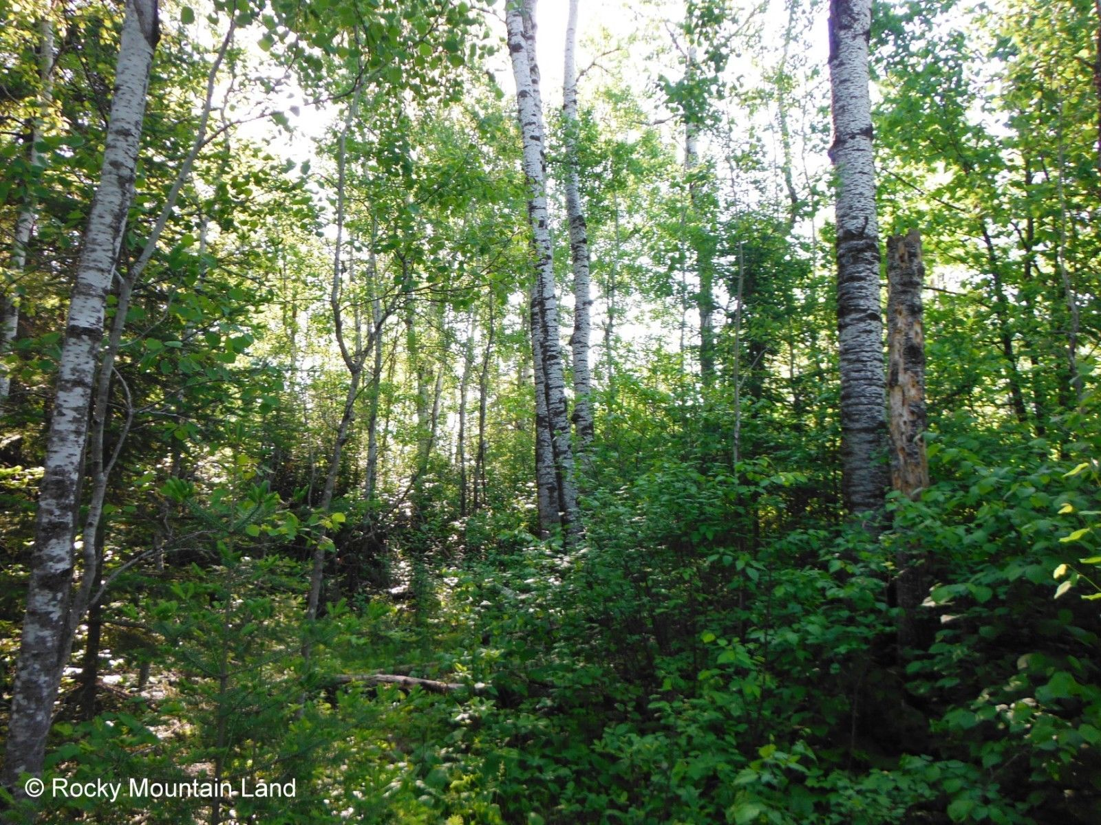 40-ACRES-NORTHERN-MINNESOTA-FOREST-HIGHWAY-FRONTAGE-BORDERS_57[1]