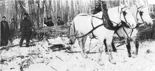 2 horses pulling logs as loggers watch